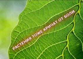 Растения могут «кричать», когда испытывают боль.