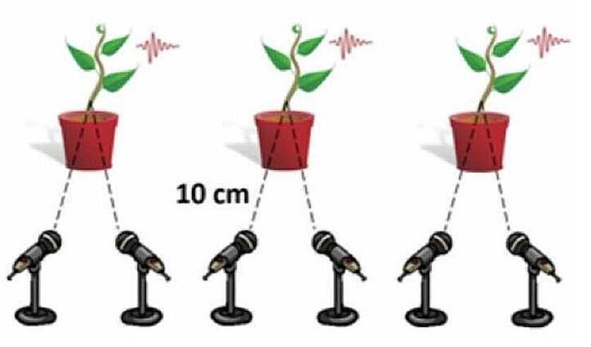 Ученые разместили микрофоны на расстоянии 10 сантиметров.