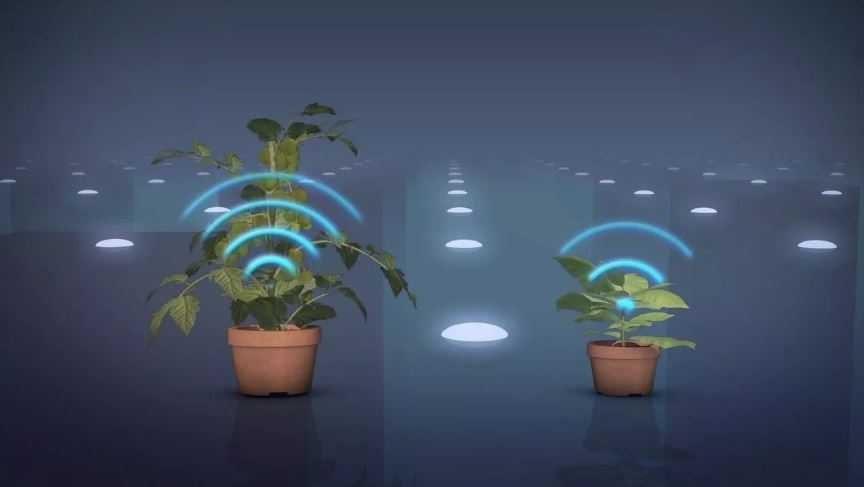 Флора способна к созданию ультразвука.
