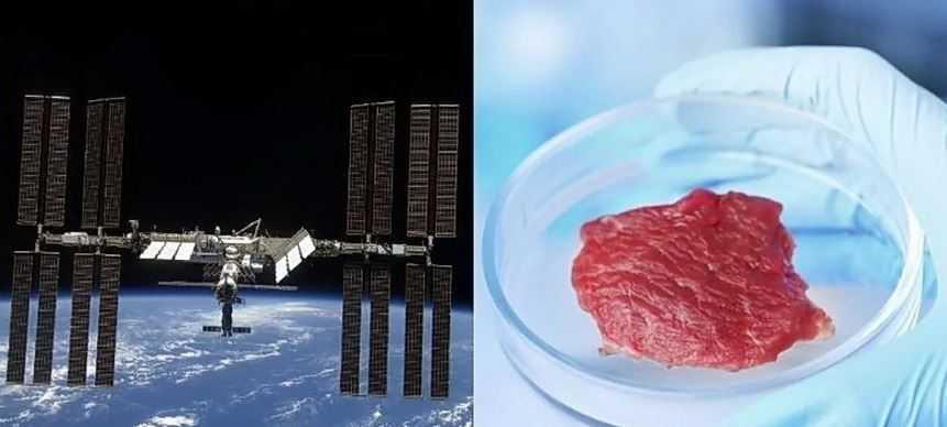 Астронавты, находящиеся на Международной Космической Станции, впервые вырастили мясной стейк.