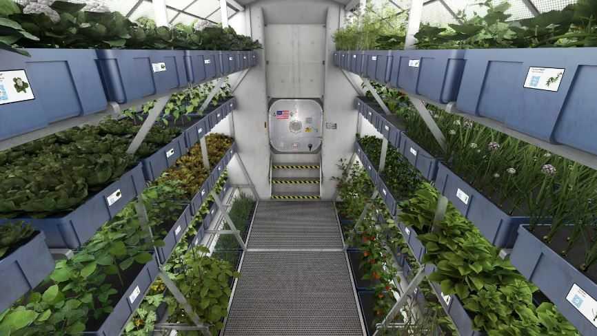 Выращенный на МКС салат не уступил в пользе земному.