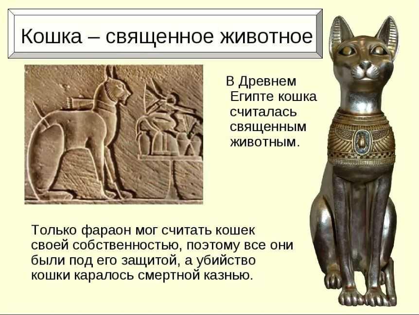 Священные кошки являлись символом плодородия и солнца.