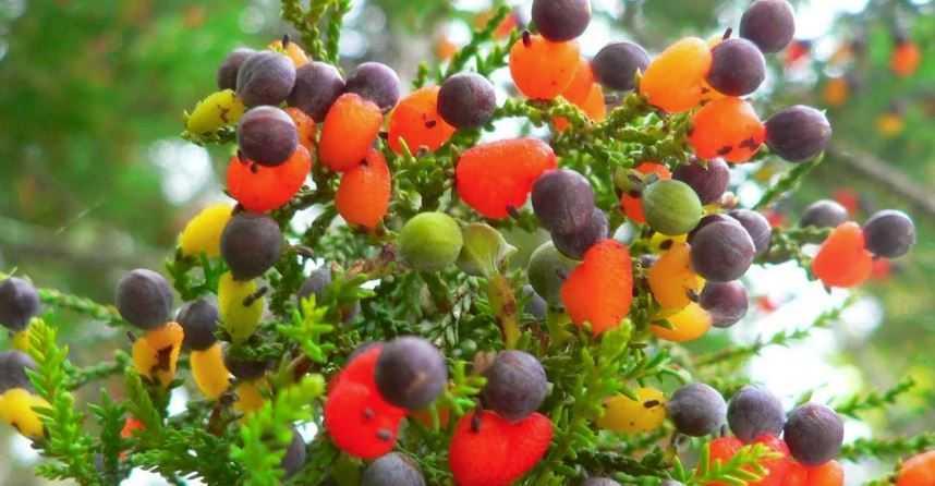 Деревья поражают своим обилием и разнообразием плодов.