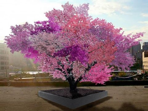 Волшебное дерево.