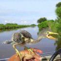 Существа, похожие на птиц, птерозавры?