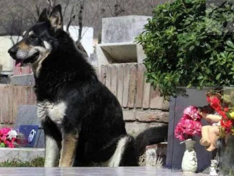 Пес ожидающий хозяина.
