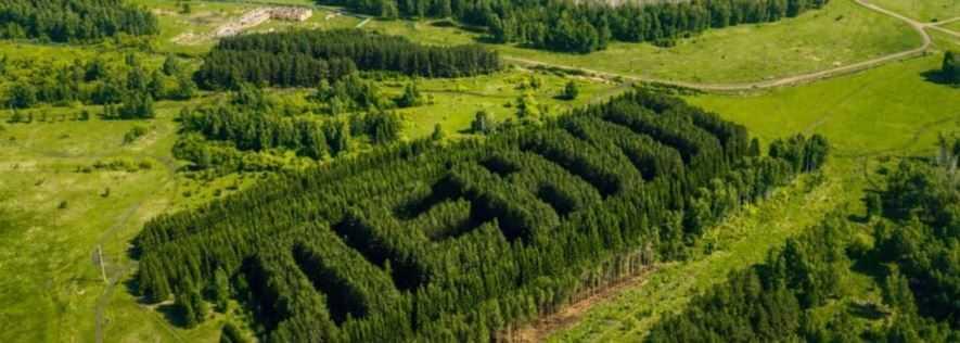 Сибирский лес как объект ландшафтного дизайна.