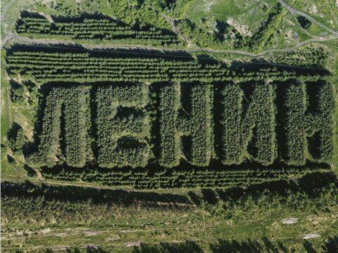 Сибирский лес.