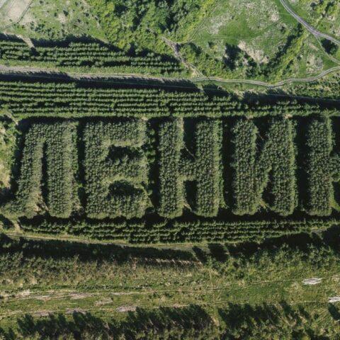 Сибирский лес сформирован, в виде надписи