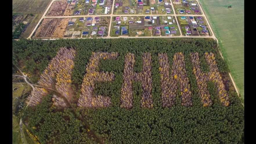 Березовые буквы в хвойном лесу.