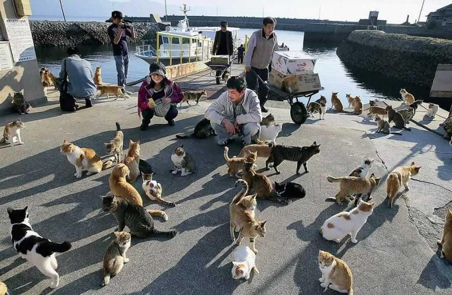 Кошачий рай по-японски.