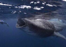 Вот это кадр! Человека поймал кит!