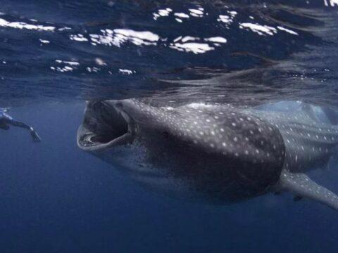Дайвер-фотограф оказался в пасти кита.