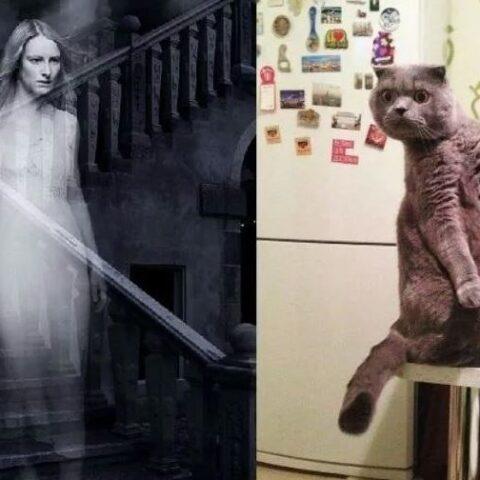 Могут ли собаки и кошки видеть призраков?