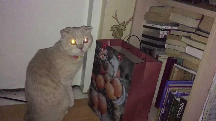 Котик увидел привидение?