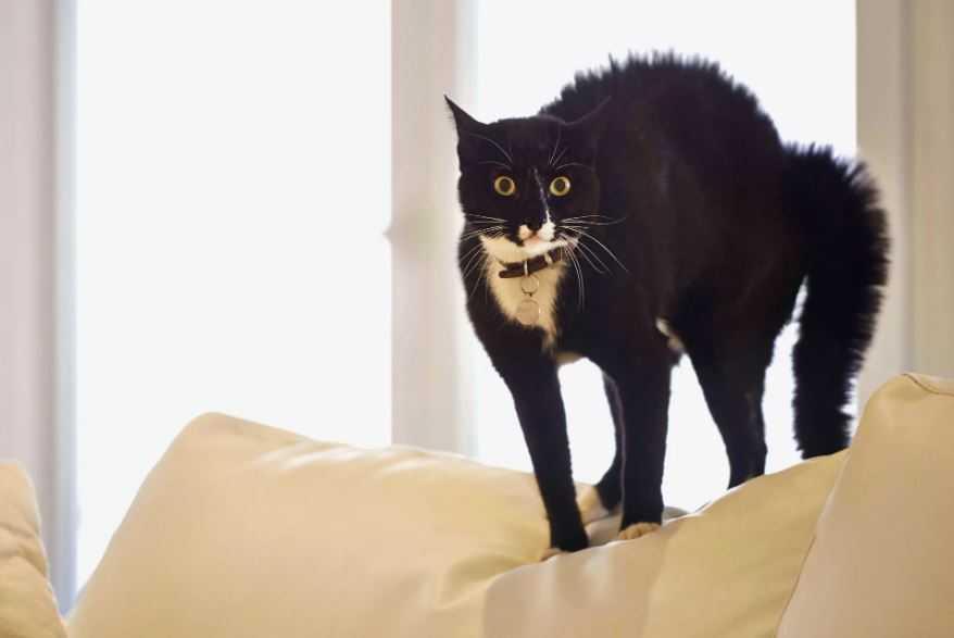 Что мистического могут видеть кошки? ...или кого?
