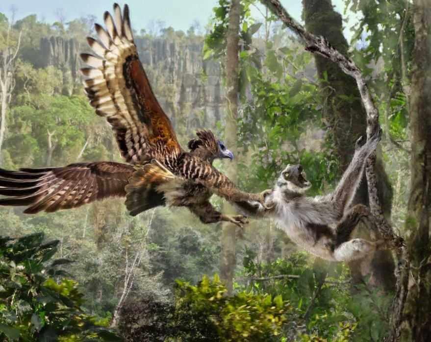 Орел-обезьяноед, или Южноамериканская гарпия - одна из самых крупных и сильных, хищных птиц.
