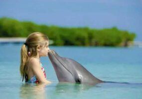 Вы все еще думаете что дельфины милые существа?