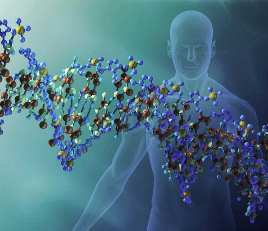 В человеческой ДНК найдены следы предков.