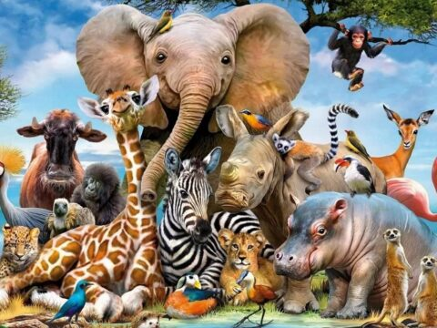 Много животных.