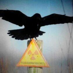 """""""Черный дрозд"""" Чернобыля: предвестник катастрофы"""