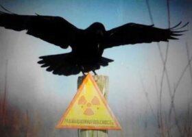 «Черный дрозд» Чернобыля: предвестник катастрофы