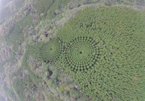 """""""Лесные круги"""" Японии: разгадка оказалась прозаичной"""