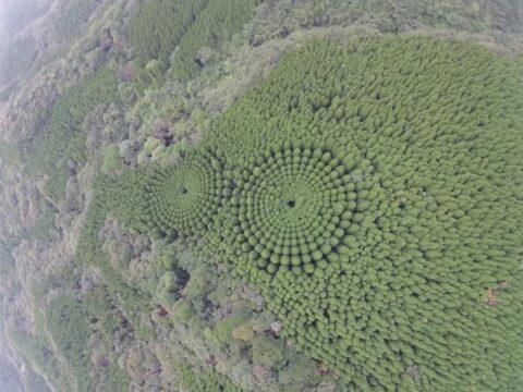 Лесные круги Японии.