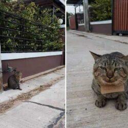 Домашний кот, вернулся домой с долгами!