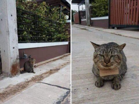Домашний кот.