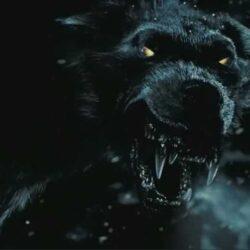 Фантомные черные псы и тюрьма Ньюгейт