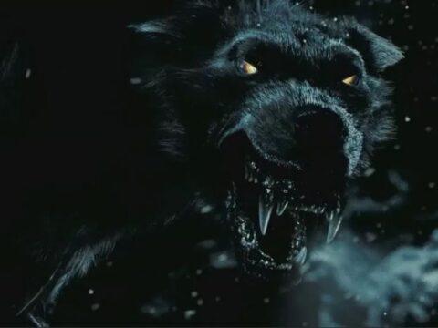 Черные псы.