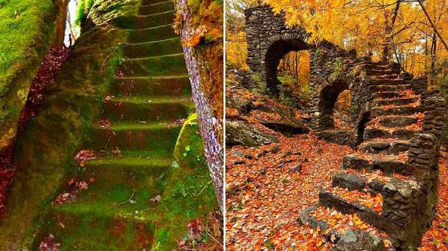 Лестницы найденные в глухих лесах.