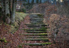 Лестницы одиноко стоящие в лесу и жуткие истории о них