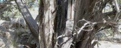 Тайна винтовки Винчестера 1882 года, найденной в парке