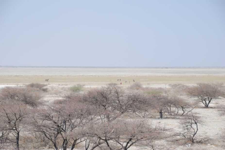 Бассейн Макгадикгади в Ботсване, где раньше было озеро сотни тысяч лет назад.