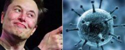 Илон Маск заявил, что пандемия коронавируса — большая ложь