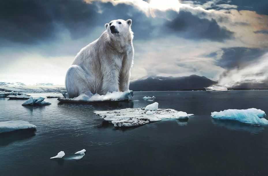 Медведь, или дух медведя, или Киник показался на глаза бывалому охотнику. Вероятно предупреждая его о чем то.