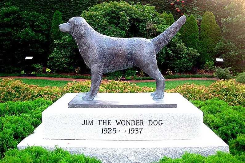 Чудо-пёс Джим. Собака с фантастическими способностями.