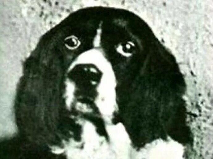 Чудо-пёс Джим.