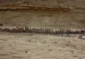 Долина китов, посреди египетской пустыни
