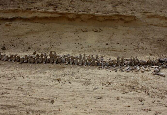 Долина китов, посреди египетской пустыни.