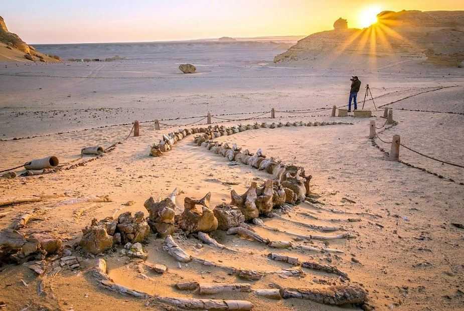 Вади-аль-Хитан, или Долина китов, может похвастаться захватывающей коллекцией окаменелостей древних морских существ. Потому что эта область 50 миллионов лет назад  была дном океана. Называемого морем Тетис, который занимал пространство между Африкой и Азией.