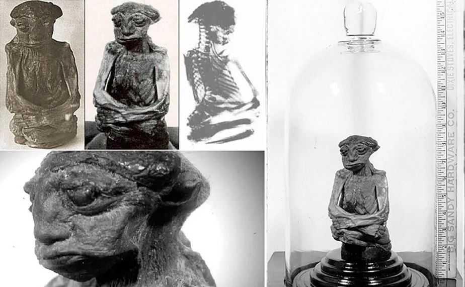 Мумия Педро (так назвали существо) была найдена в горах Сан-Педро в США.