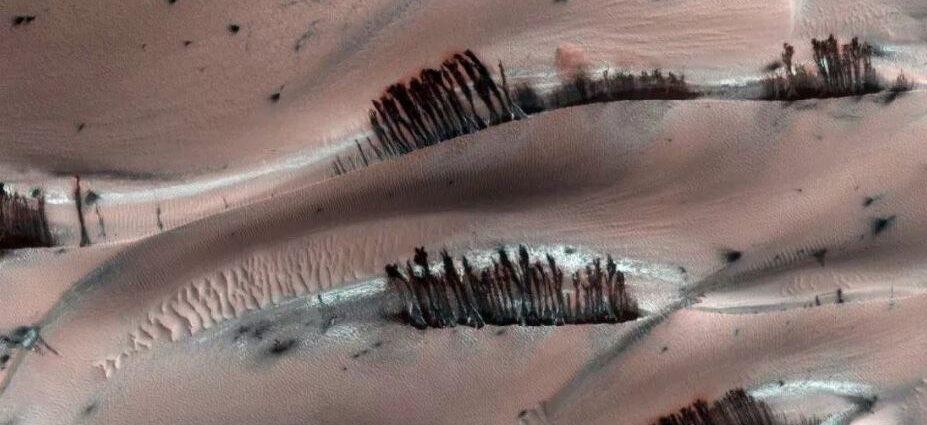 Деревья на Марсе.