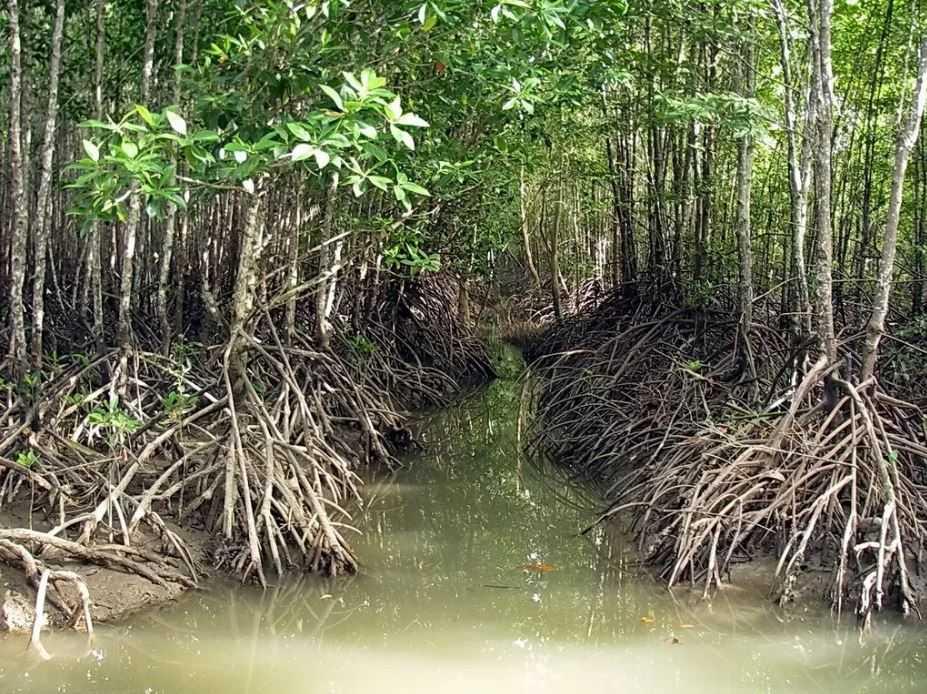 Может быть собака запуталась в корнях мангровых деревьев?