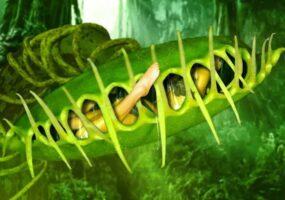 Плотоядные растения: легенды флоры-людоедки