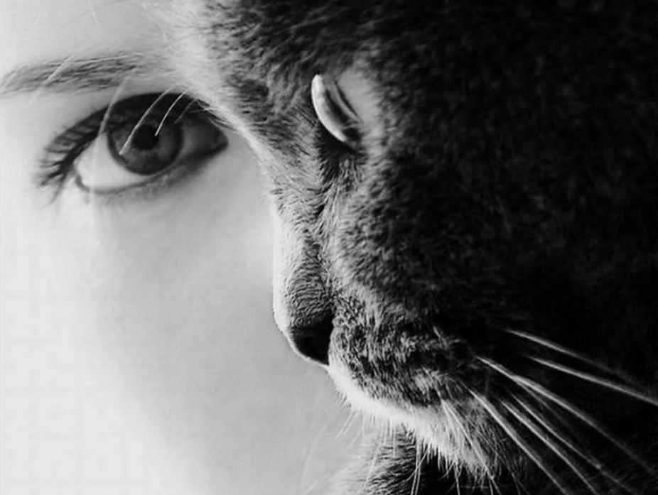 Похоже взгляд черноглазых людей имеет какую-то особую силу/энергию. И может быть это способ управления не только кошками...