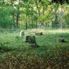 Кладбище холостяцкой рощи: истории с привидениями