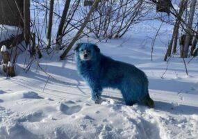 Синие собаки замечены у химзавода в Дзержинске